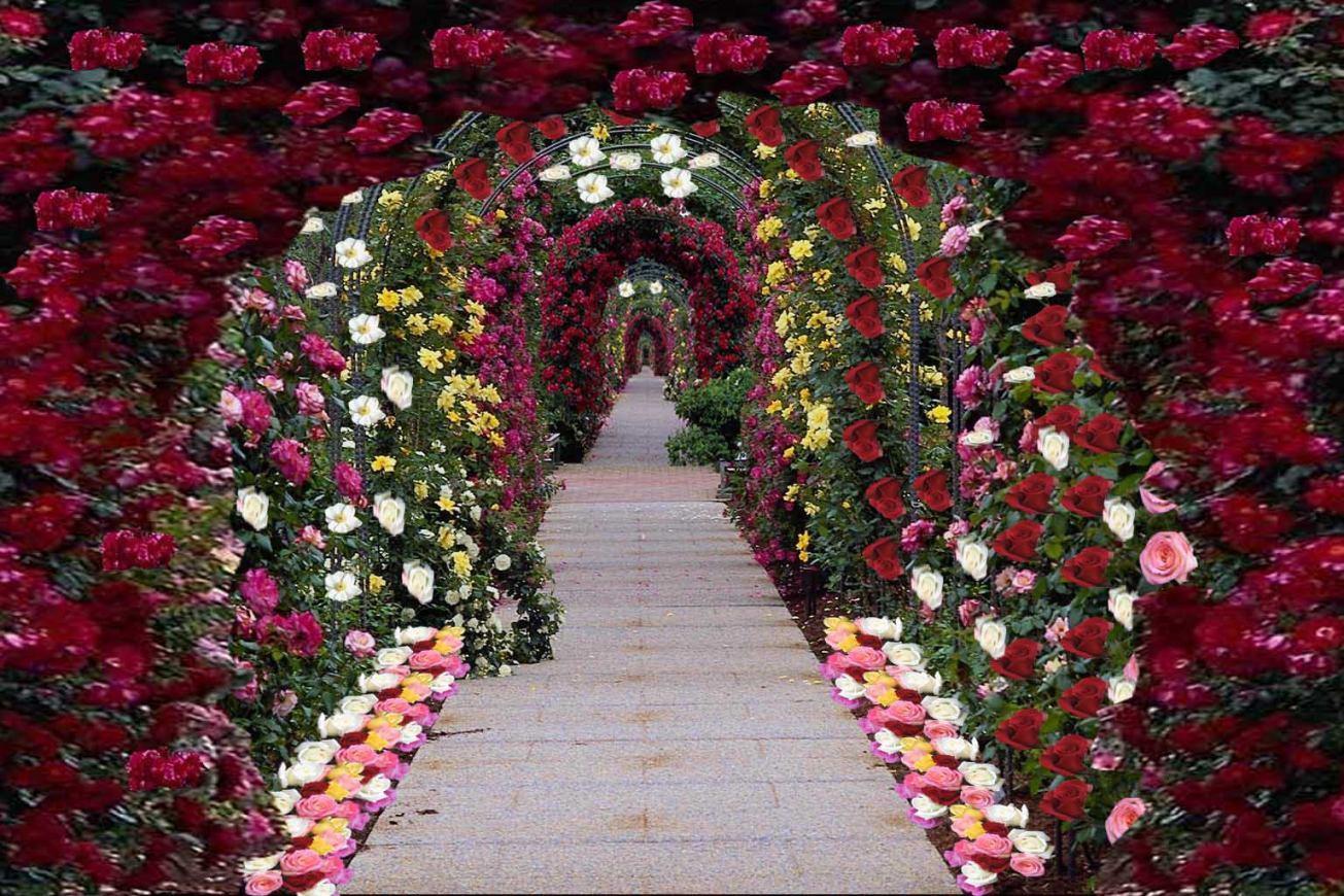 Красивые фотографии цветочных аллей